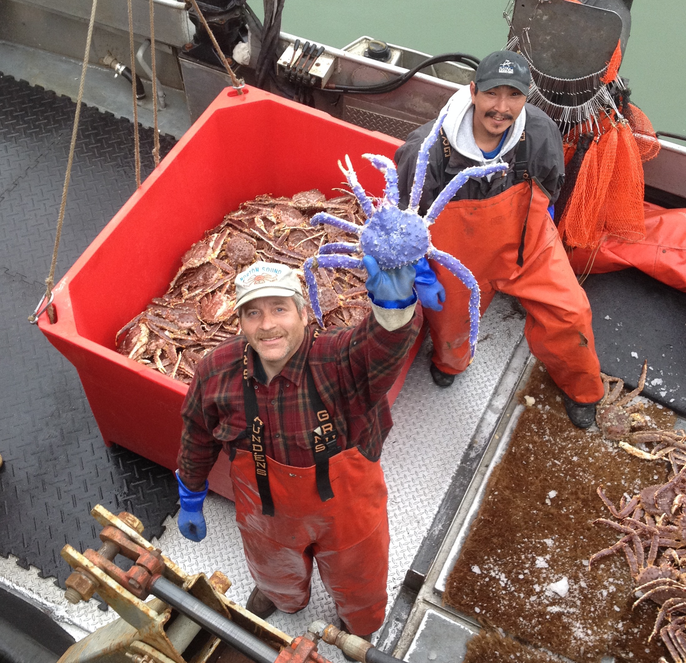 Profile: Blue-Colored Red King Crab