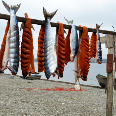 Salmon drying on a fish rack in Teller. Photo: Jenn Ruckel, KNOM.