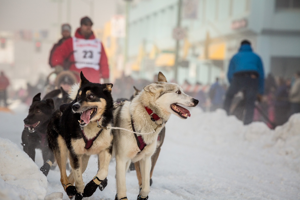 Aaron Burmeister at the Ceremonial Start, Iditarod 2014