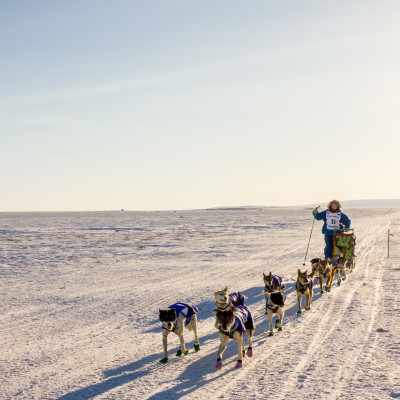 Iditarod 2016 musher Wade Marrs