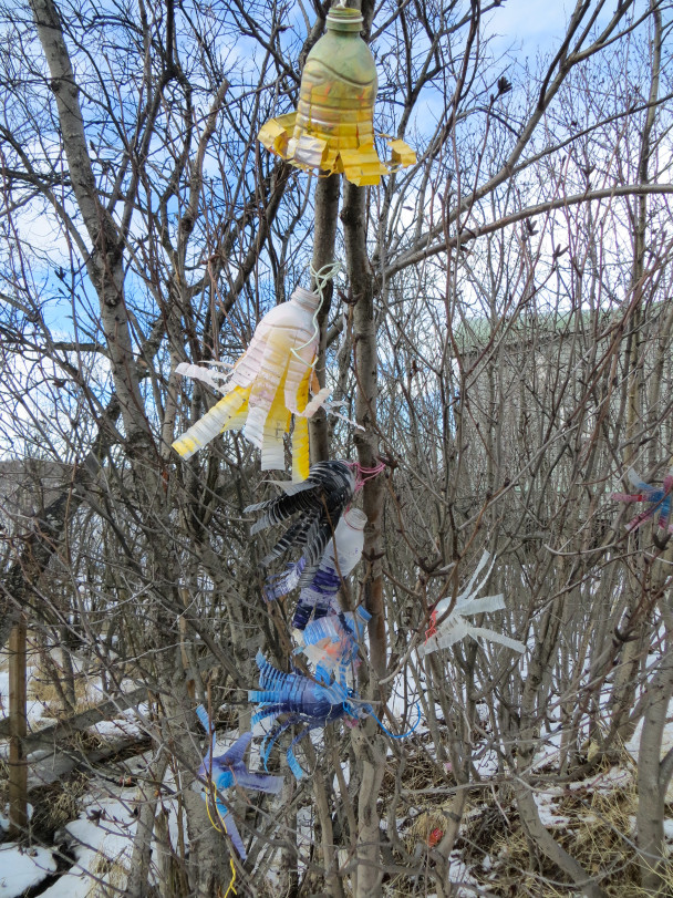 Water bottle art on a tree in Bethel. (Photo: Maddie Winchester, KNOM)