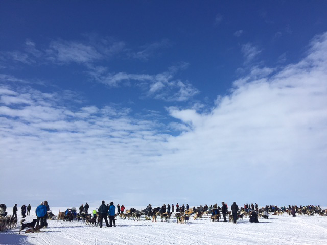 Racers At The Starting Line of the 2016 Kobuk 440 Photo: Emily Schwing, KNOM.