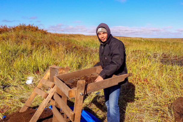 An archaeological dig intern helps with excavations in a grassy field near Shaktoolik on a sunny day.