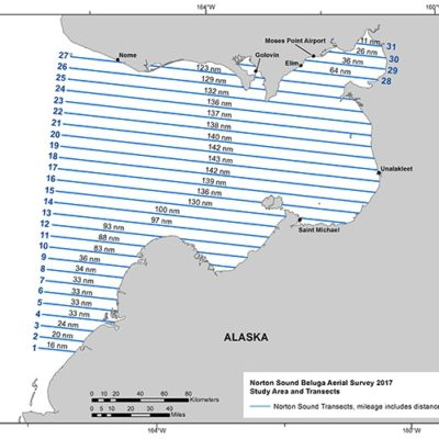 Study transects for the beluga whale aerial survey in Norton Sound. Photo Credit: NOAA Fisheries, 2017