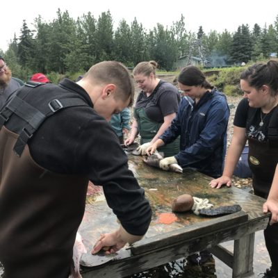 Educators new to Alaska try their hand at cutting fish during Cultural Camp for Educators.