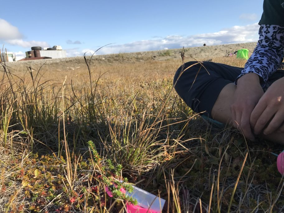 Jasmine Shaw sits cross-legged beside a crowberry tagged with a bright pink ribbon for a study monitoring berries in Shishmaref.