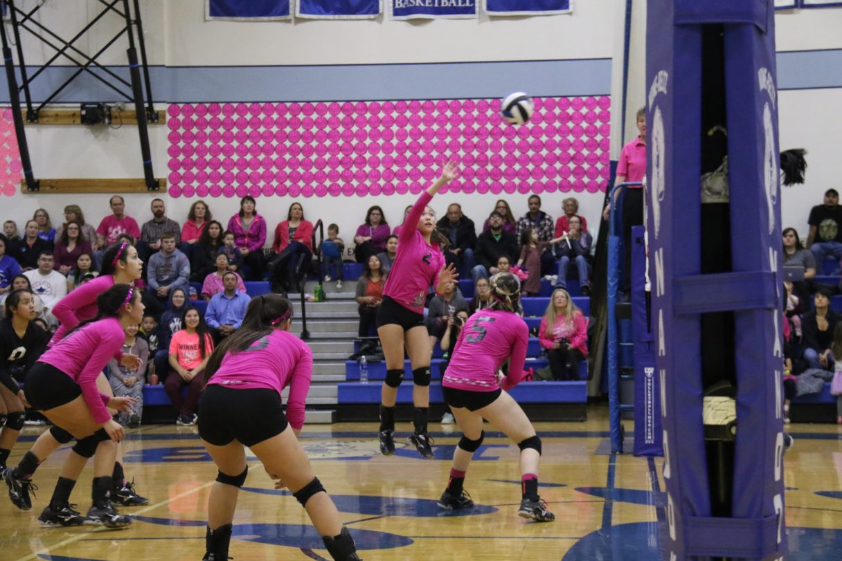 """Pink """"honor balls"""" fill the gym walls as Nome-Beltz senior Taeler Brunette spikes the ball in a game Friday (Photo: Janeen Sullivan, used with permission)"""