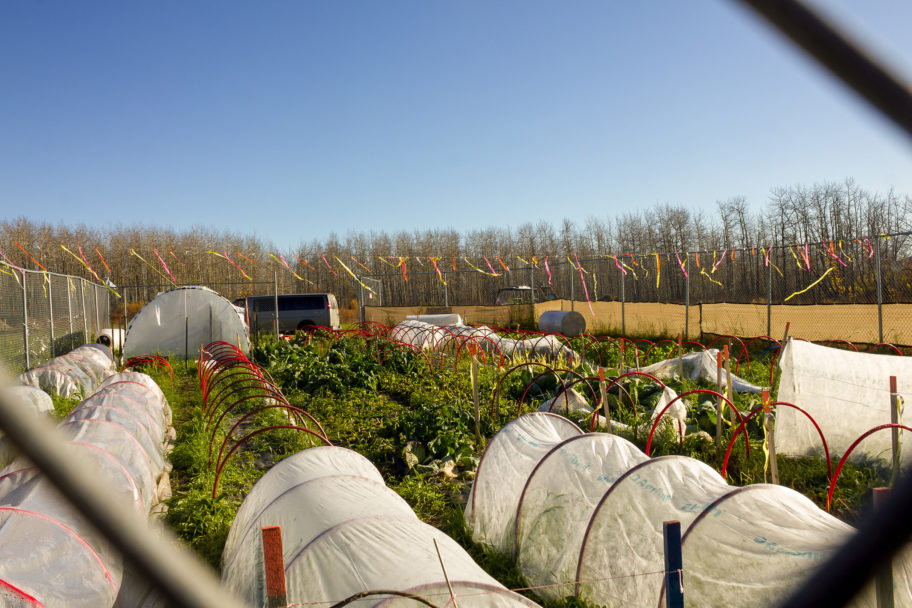 An agricultural garden, partially protected with translucent covers.