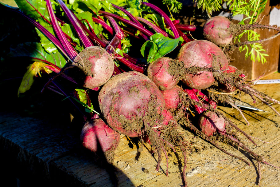 Red beets, partially covered in dirt, freshly harvested.