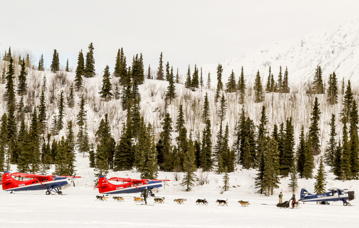 Iditarod team runs past several parked bush airplanes in a snowy landscape.