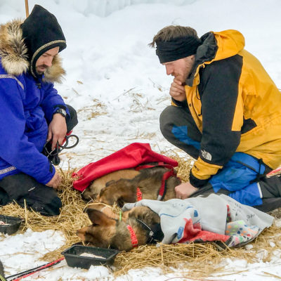 Two men in parkas kneel over resting sled dogs