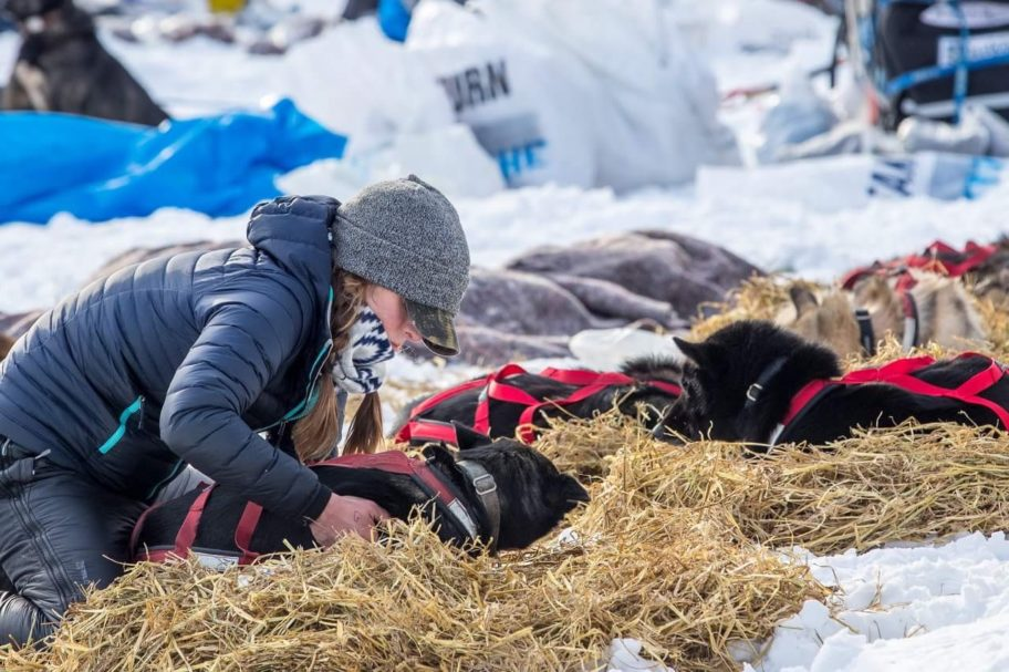 Emily Maxwell kneels to settle her sled dogs on straw at a race checkpoint.