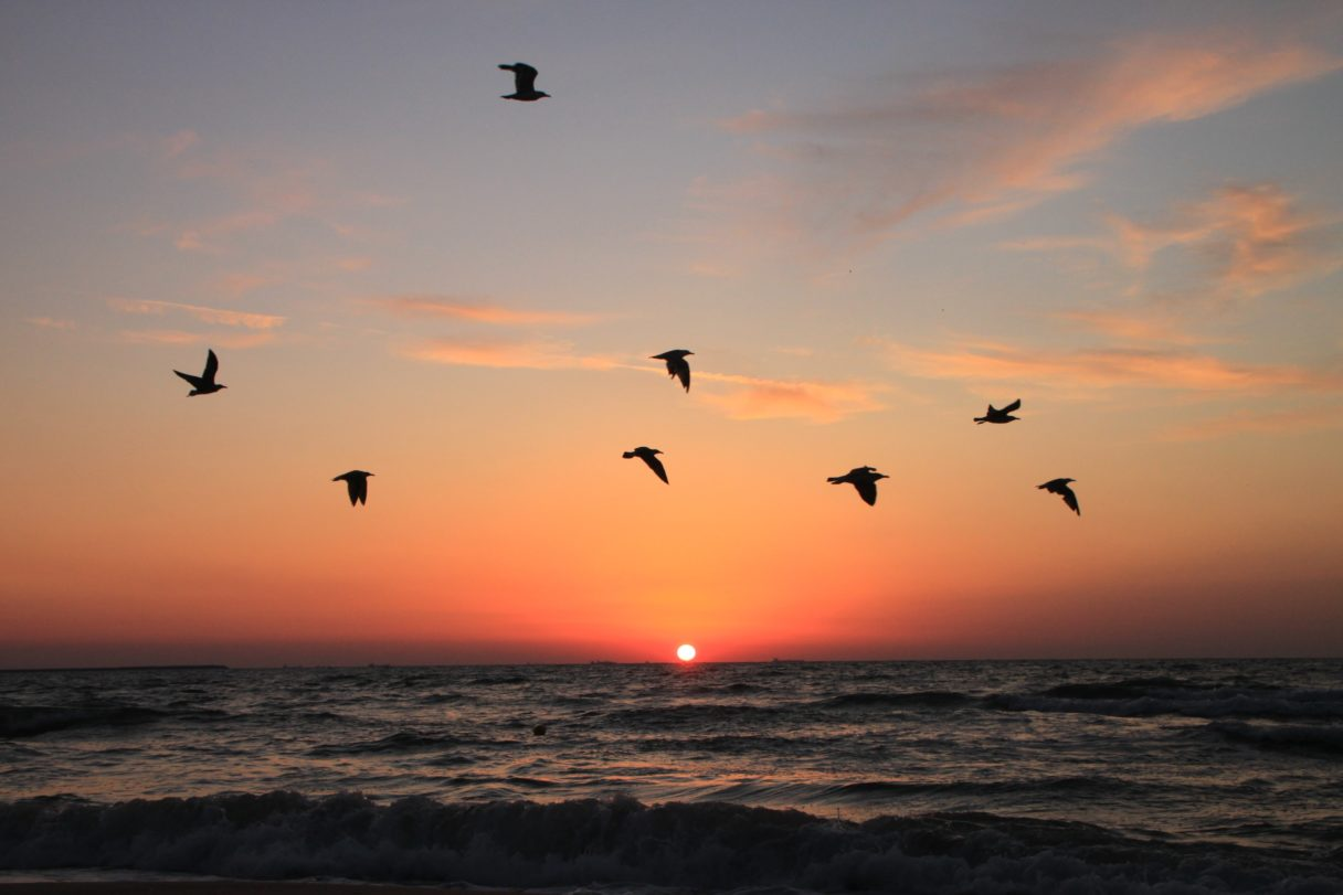Silhouettes of seabirds flying above an ocean at sunset.