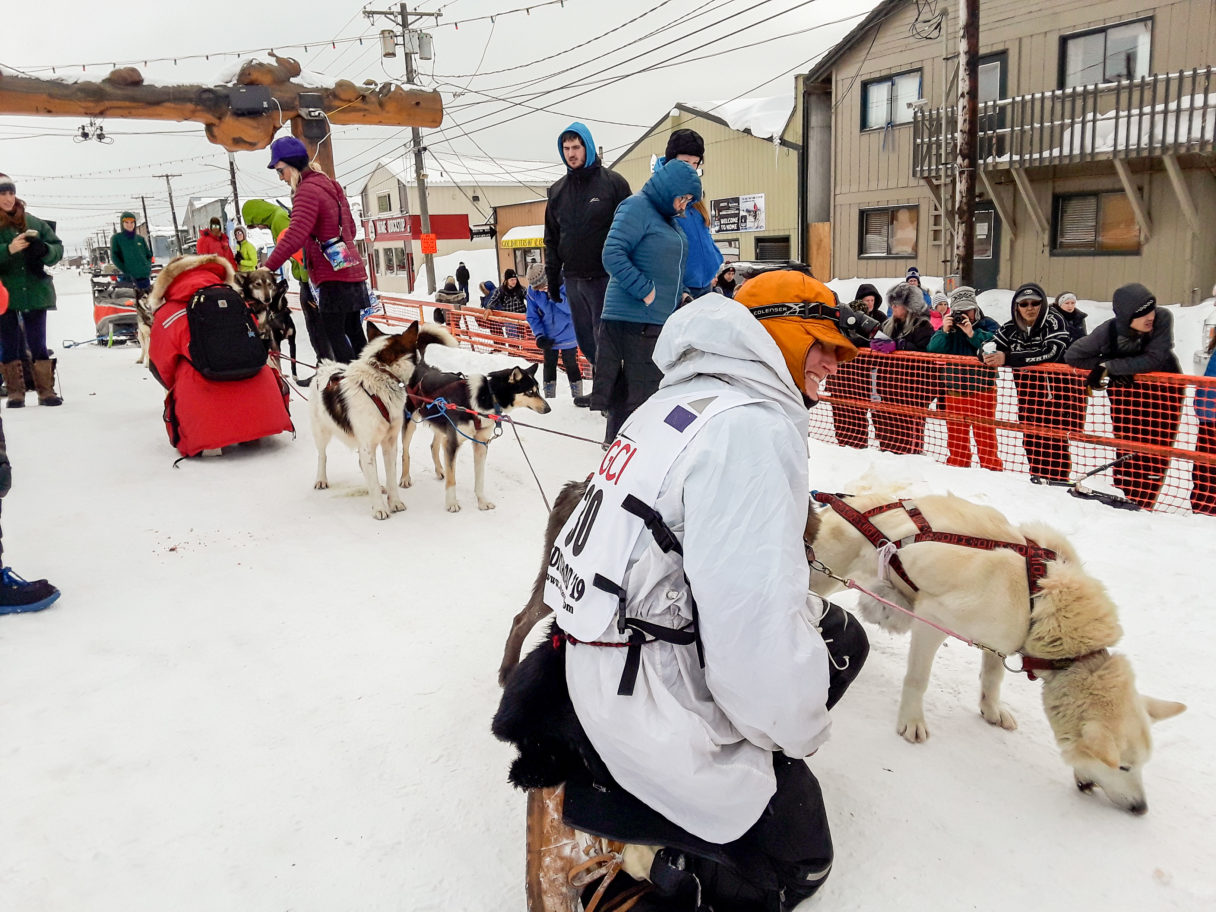 Musher in white parka kneels next to sled dog team next to Iditarod finish line in downtown Nome, Alaska.