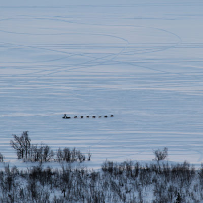 Aerial view of sled dog team mushing along vast, snowy plain