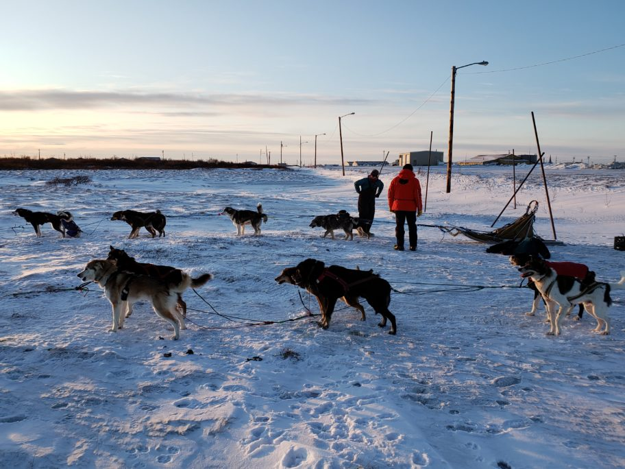 Sled dogs from Stephanie Johnson's and Kirsten Bey's teams are ready for their training run in Nome. Photo from Davis Hovey, KNOM (2020).